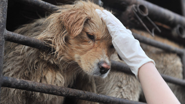 What's wrong with eating dog meat?