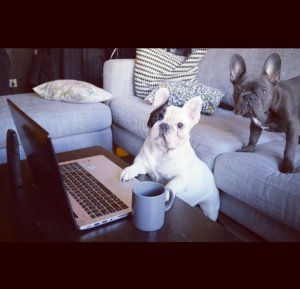 @manny_the_frenchie: Another day at work. #newday #coffeecup