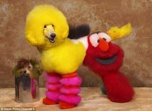 Dog Bert Ernie