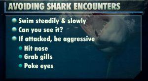 shark encounter