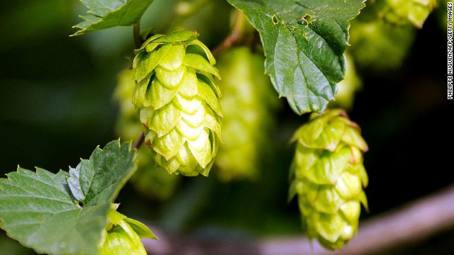 Singling out single-hop beers